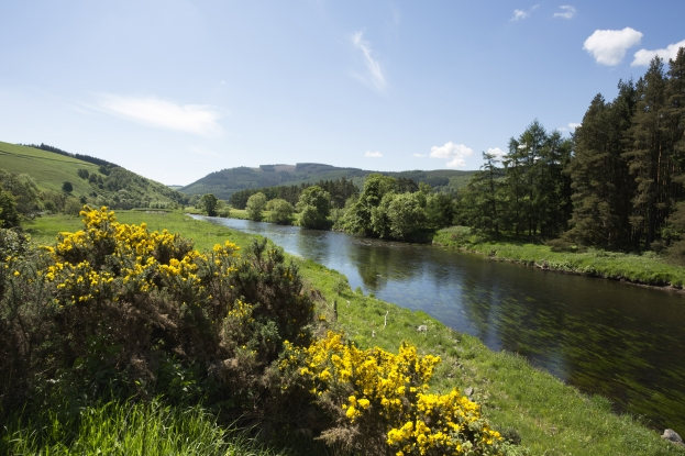 River Tweed at Cardrona Forest