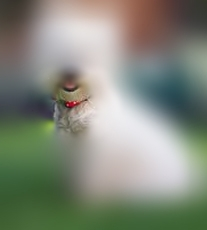 Experience - I am in the park and am drawn to the red collar.  I feel around it and it is soft and fluffy.  The owner tells me the dog is a Westie.