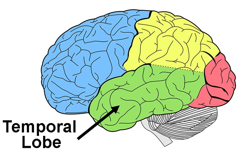 Stored memories are mostly located in the temporal lobes.