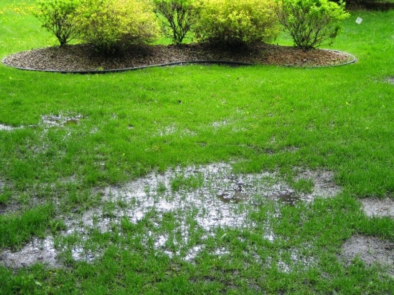 Example of a waterlogged lawn
